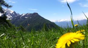 summertime_torretta